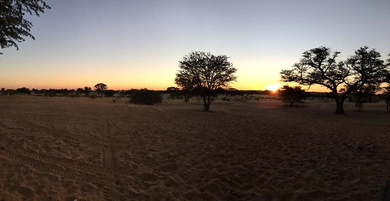 Rooiputs @ Kgalagadi Transfrontier Park