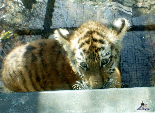 Zoo Eberswalde 22.03.2015   118