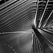What ... Lines !!!! by jo.misere