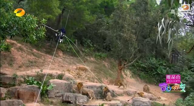 Feeding the lions (screen grab)