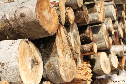 Balderschwang Holz