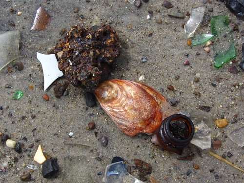 dead horse bay debris