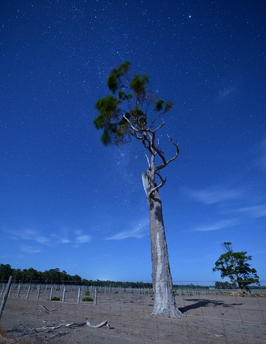 Lone tree in the Moon light