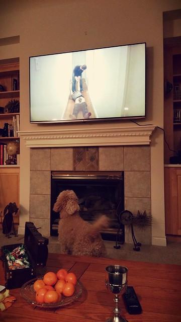 a dog watching a trippy movie during a party