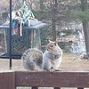 I think the squirrels are enjoyin the feeder more then the birds. #nature #squirrels #naturelovers_united