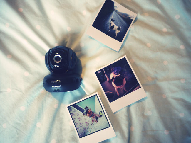 pet-dog-blog