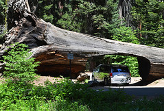 Sequoia National Park aneb V zemi obrů