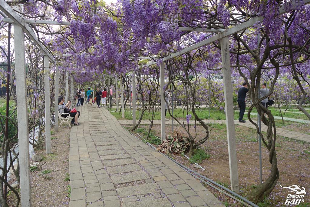 淡水紫藤咖啡園11
