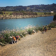 Going in a celebratory hike at Pt. Isabel on our way home! The boys are having a blast and this is the first break I've gotten in over a month... :heart:️