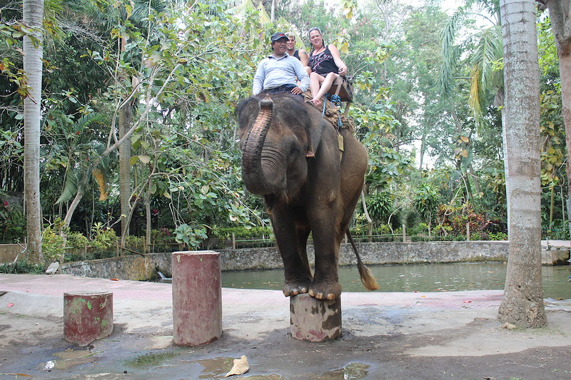 Bakas Elephant Tour, Bali 2014 (1)
