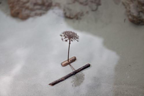 Petit Port Pooh Stick