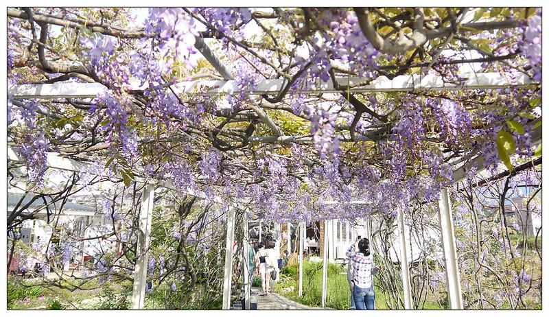 紫藤咖啡園 14g