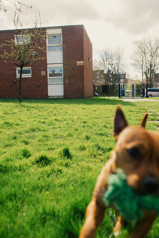 Pop Pups: Peace