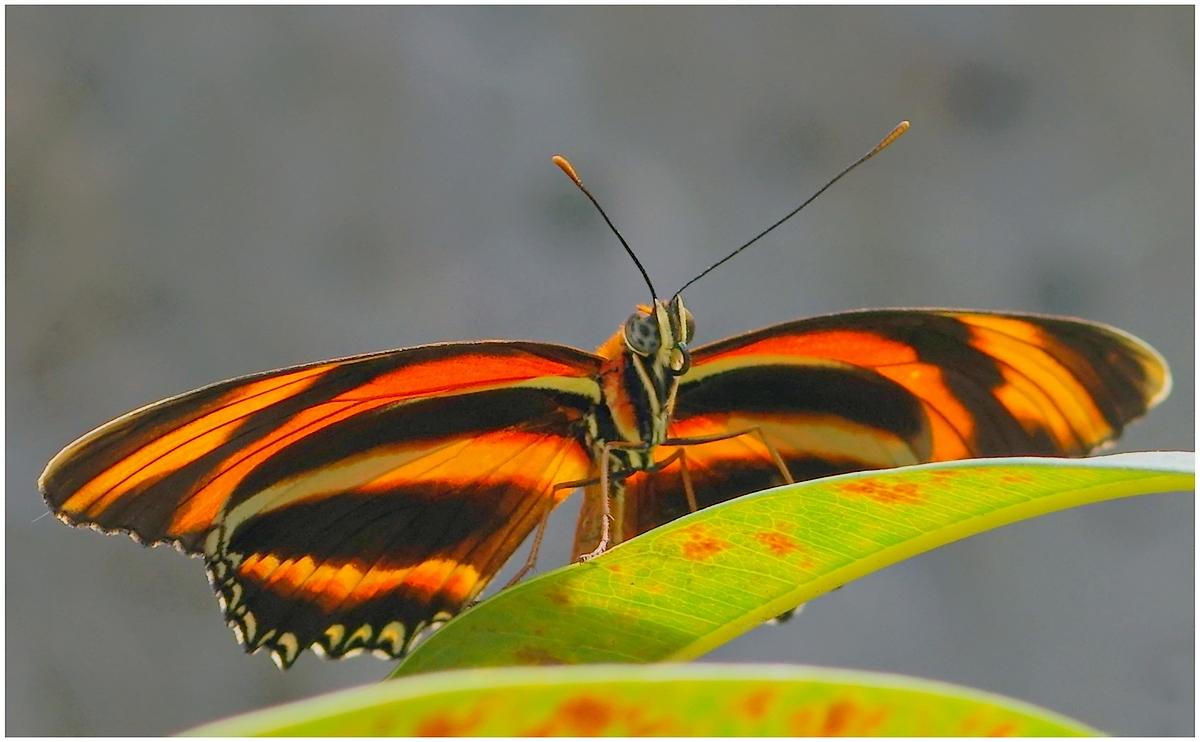 Papillons en Fêtes 2015 16825187429_4d4d8a5104_o