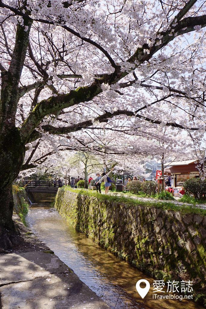 京都赏樱景点 哲学之道 30