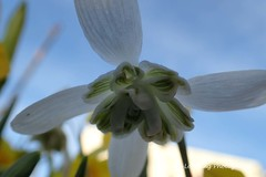 Flowers in my garden (6)