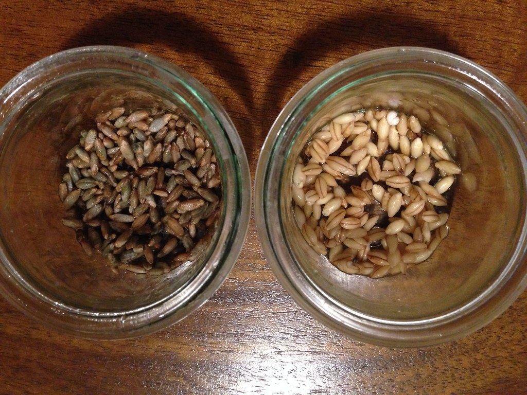 Sprouting tests