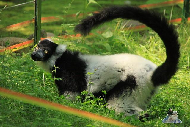 Zoo Eberswalde 04.06.2011 78