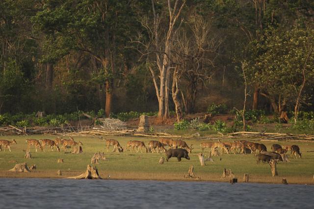 Animaux sur le bord de la rivière à Nagarhole