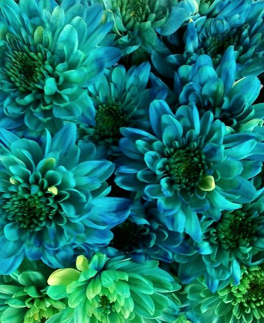 BLUE FLOWERS #1 on 17 April 2015, EDIT C