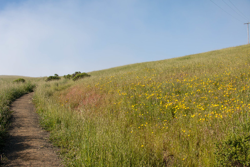 05.15. Russian Ridge OSP