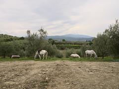 Tuscany May 2016
