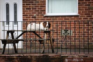 Off duty guard dog