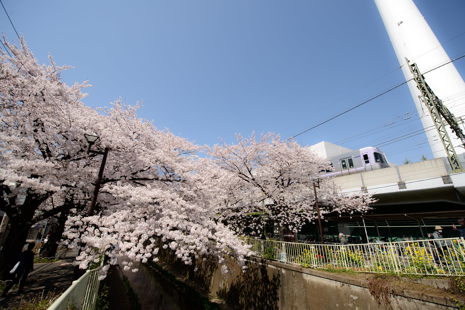 春うらら -京王井の頭線-