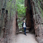 Emily in a Redwood, Muir Woods