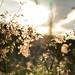 Gentle breeze by andr3.moraes