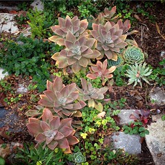 Bayview succulents