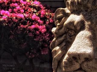 20150419-Stone Lion & Azaleas