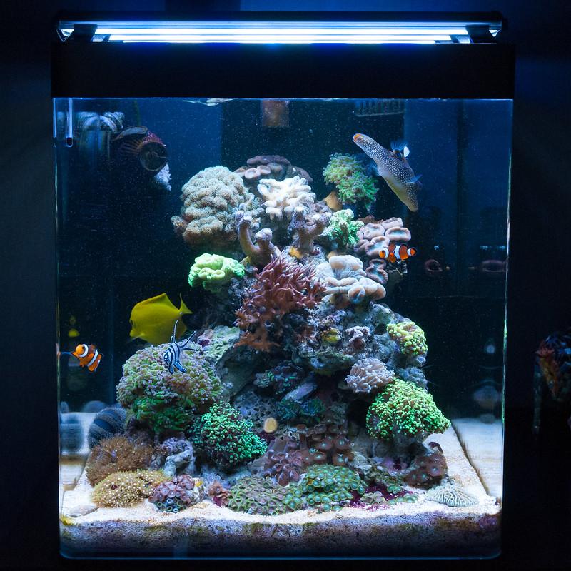 Mon Nano Récif 60 litres (BAC ARRETE) - Page 2 17039701919_6ede48768d_c