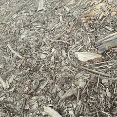 soil(0.0), scrap(0.0), rubble(1.0), wood(1.0), mulch(1.0),