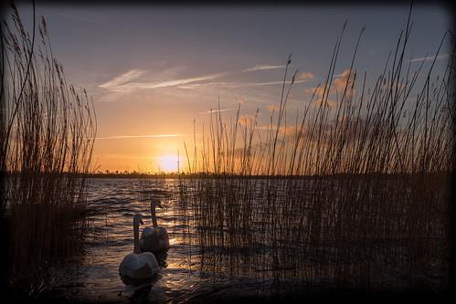 sunset sun lake see swan sonnenuntergang swans sonne schwan schwäne pönitzer