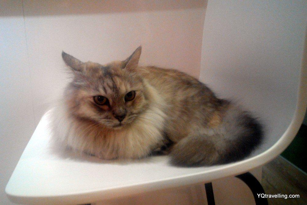 Cat cafe Neko no Niwa's Miley