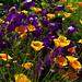 Summer colors / Colori estivi by Giorgio Ghezzi