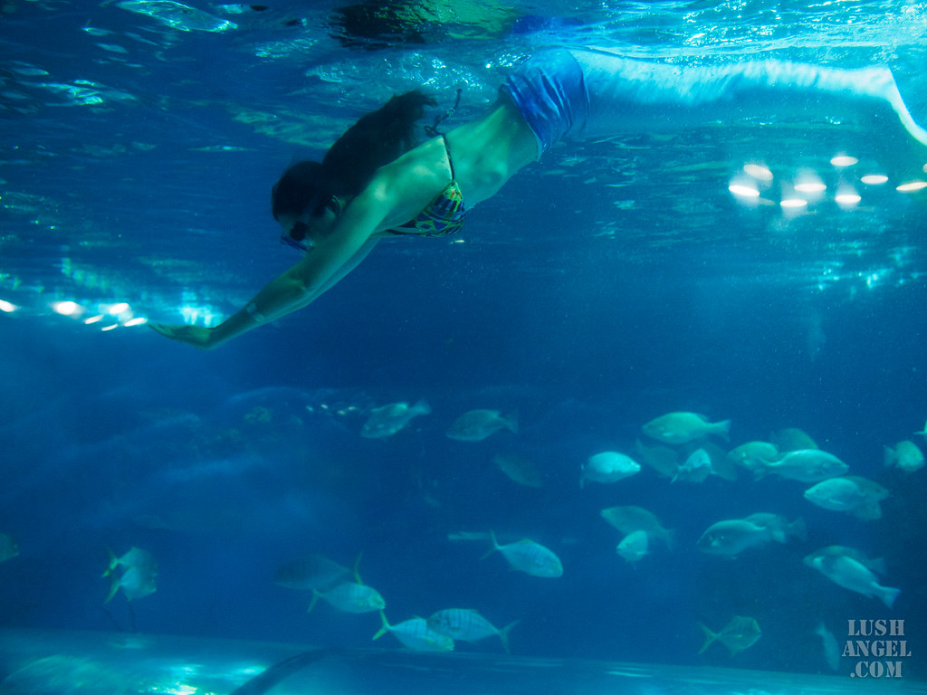 crown-regency-aquarium-mermaid