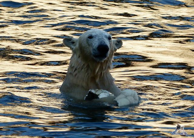 Zoo am Meer 08.03.2015  180