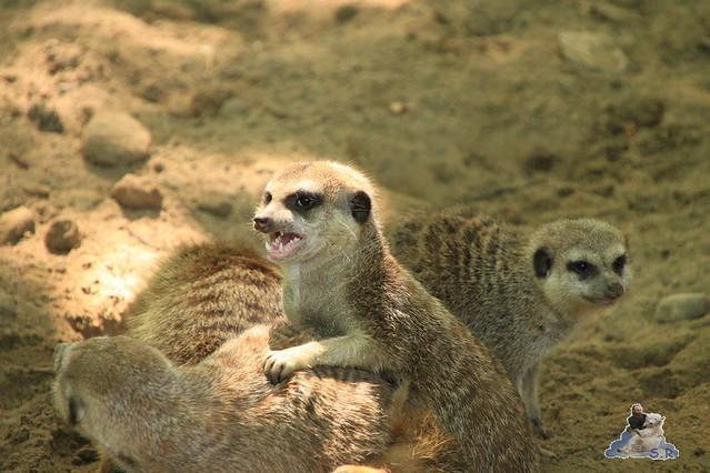 Zoo Eberswalde 04.06.2011 67