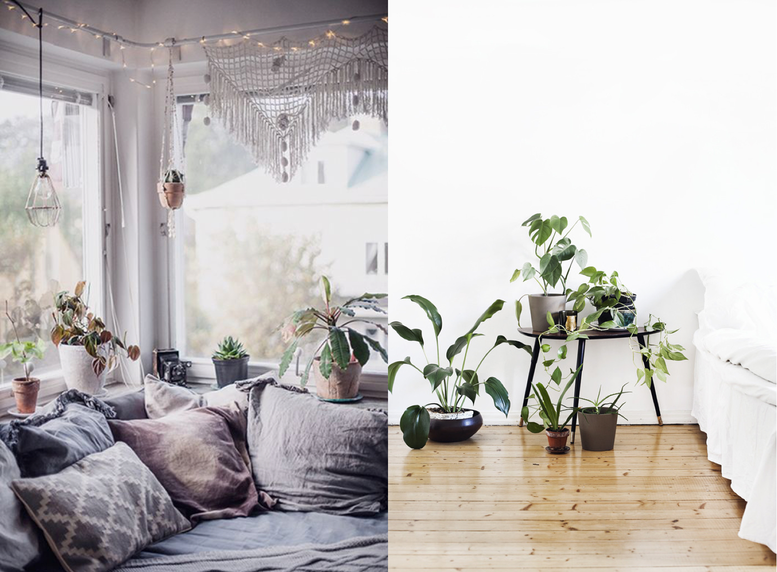 boho house plants boho interior