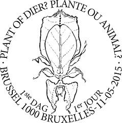 09 Plante ou animal zBxl N