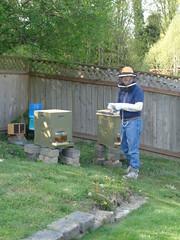 The Gryphon Beekeeper