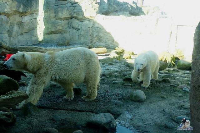 Zoo am Meer 08.03.2015  251