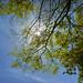 2015.04.23-01 Season of fresh green (Sigma DP1Merrill + Ricoh GW-3)