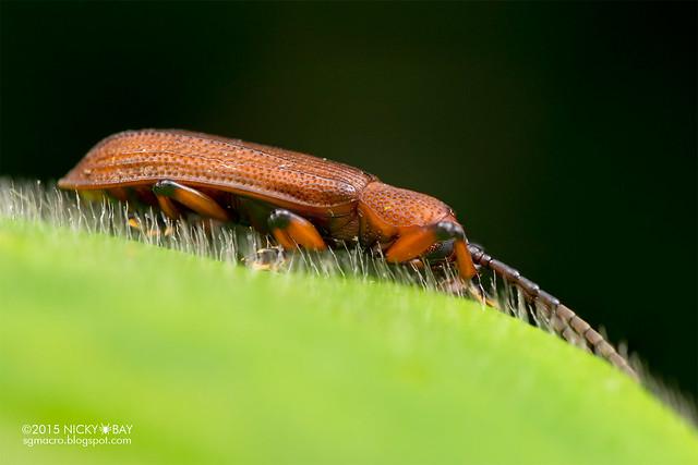 Beetle - DSC_3755