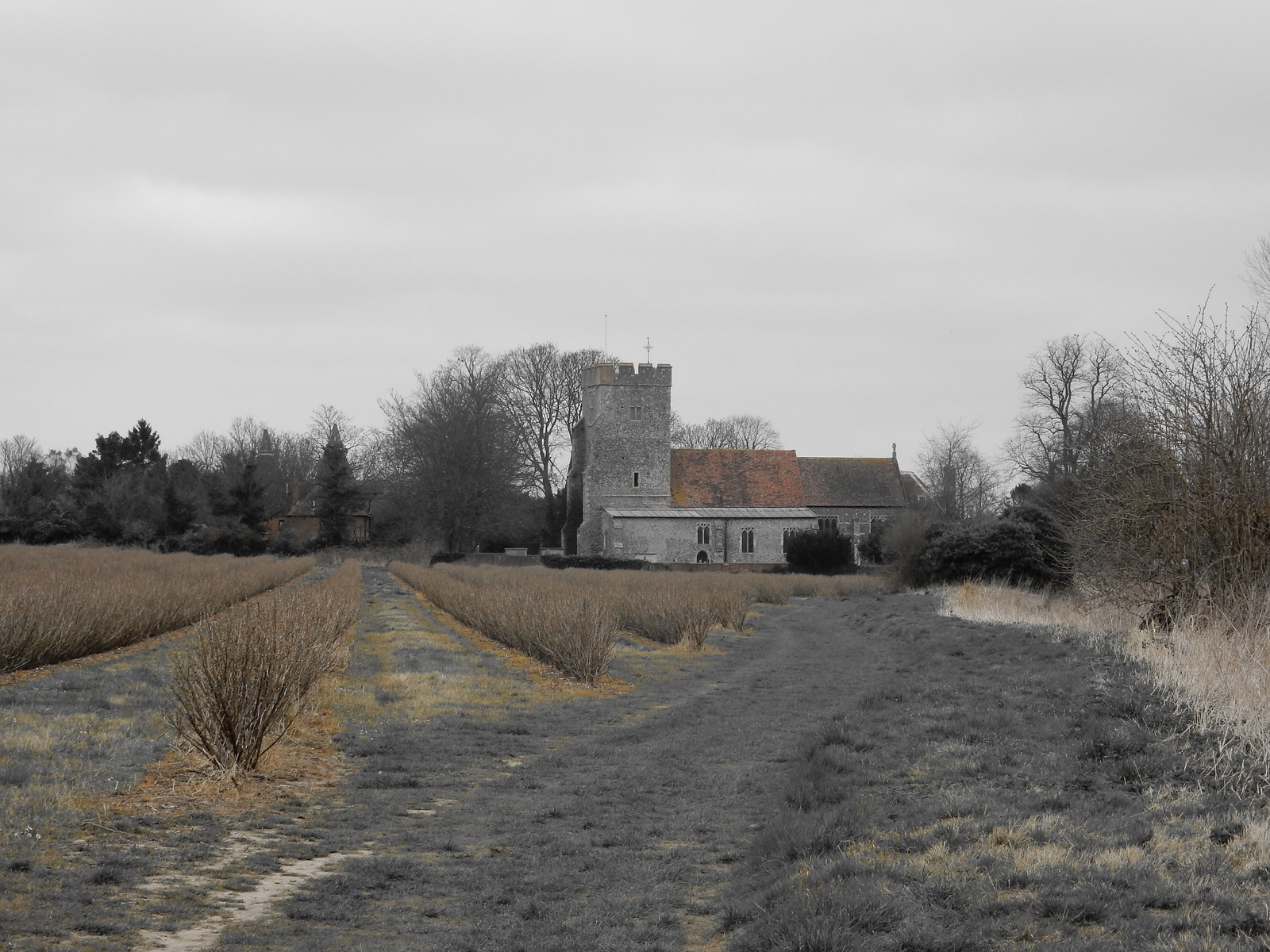 Approaching Whickhambreaux Church Sturry Circular (selective colour feature)