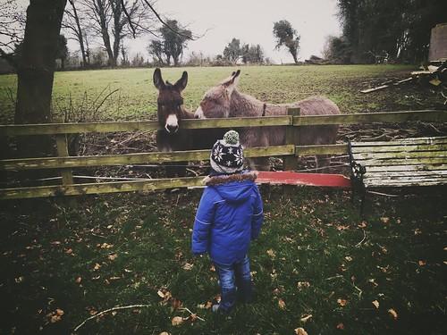Meeting the donkeys