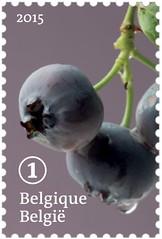 13 FRUITS OUBLIÉS timbre 7 myrtille
