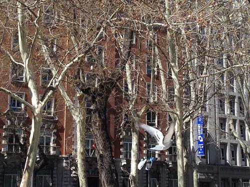 Madrid, Paseo de Recoletos